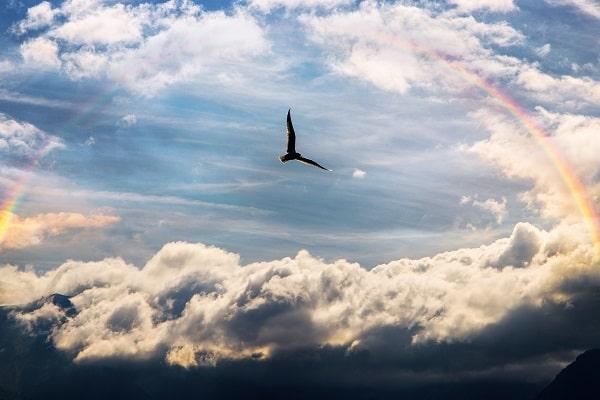 虹と自由の翼